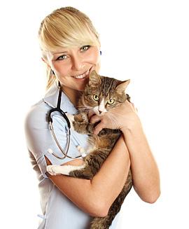 вакансия ветеринарного врача ассистента ветеринарного врача